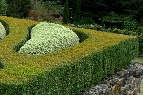 Popular Hedges