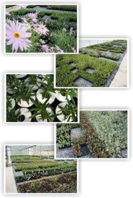 tubestock_planting